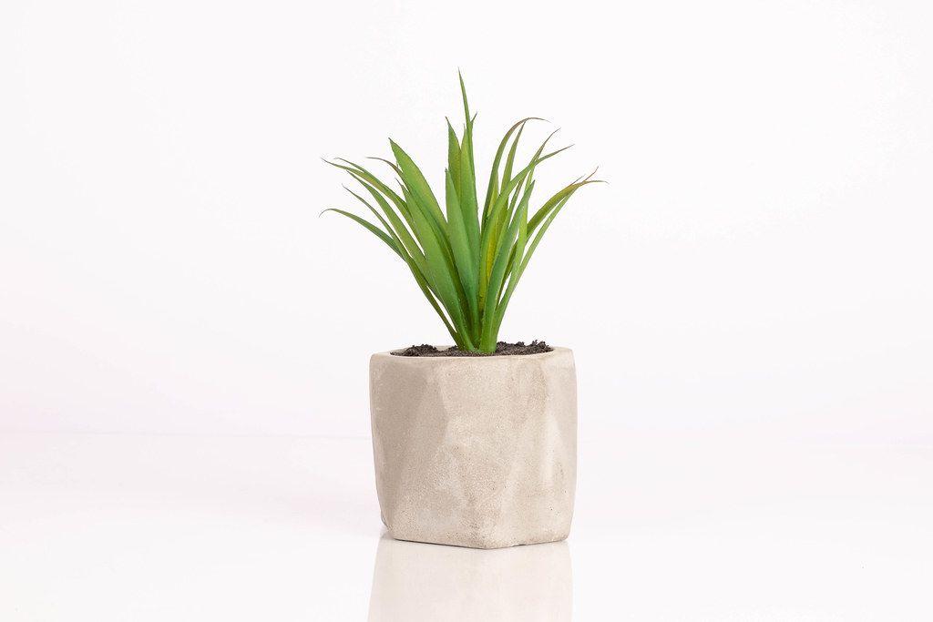 Künstliche Pflanze vor weißem Hintergrund