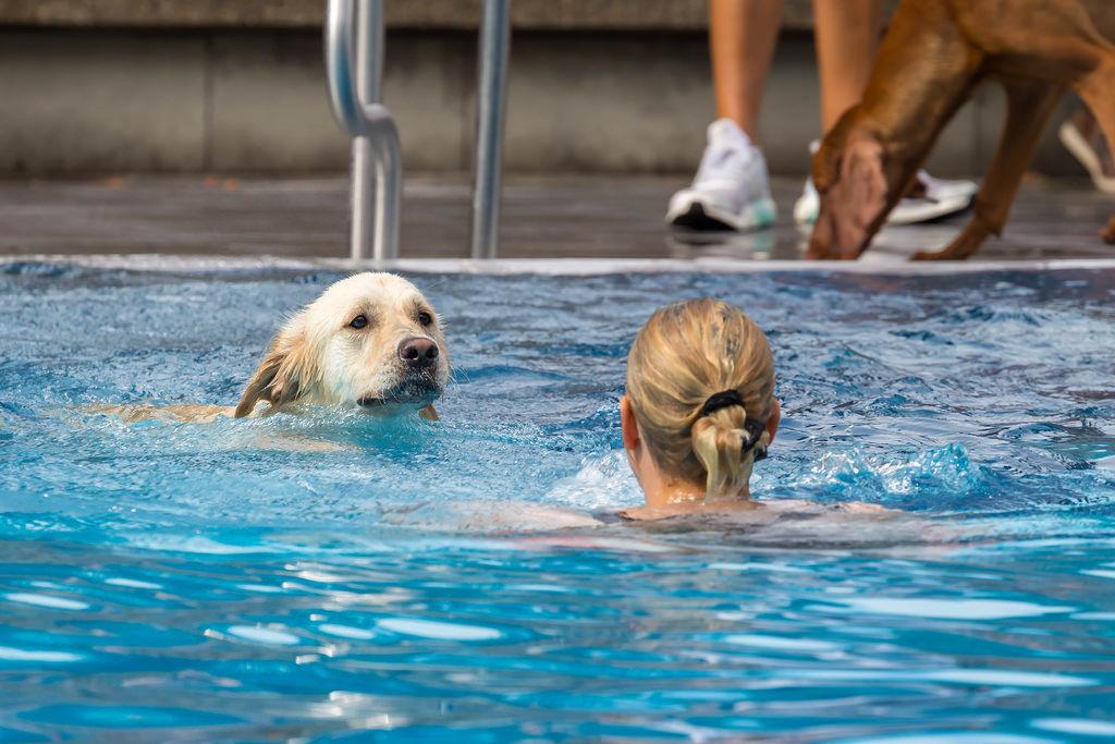 Labrador und Frau schwimmen