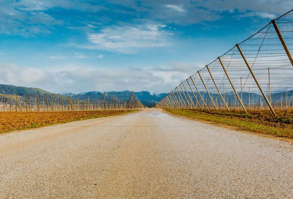 Landstraße zwischen den Feldern