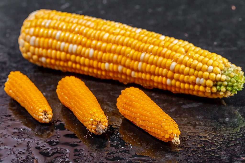 Large and small shakes of corn on black background (Flip 2019)