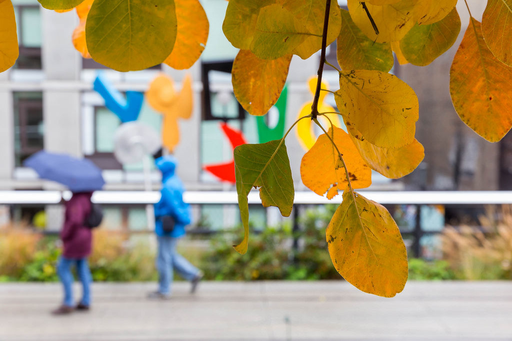 Leaves at the High Line