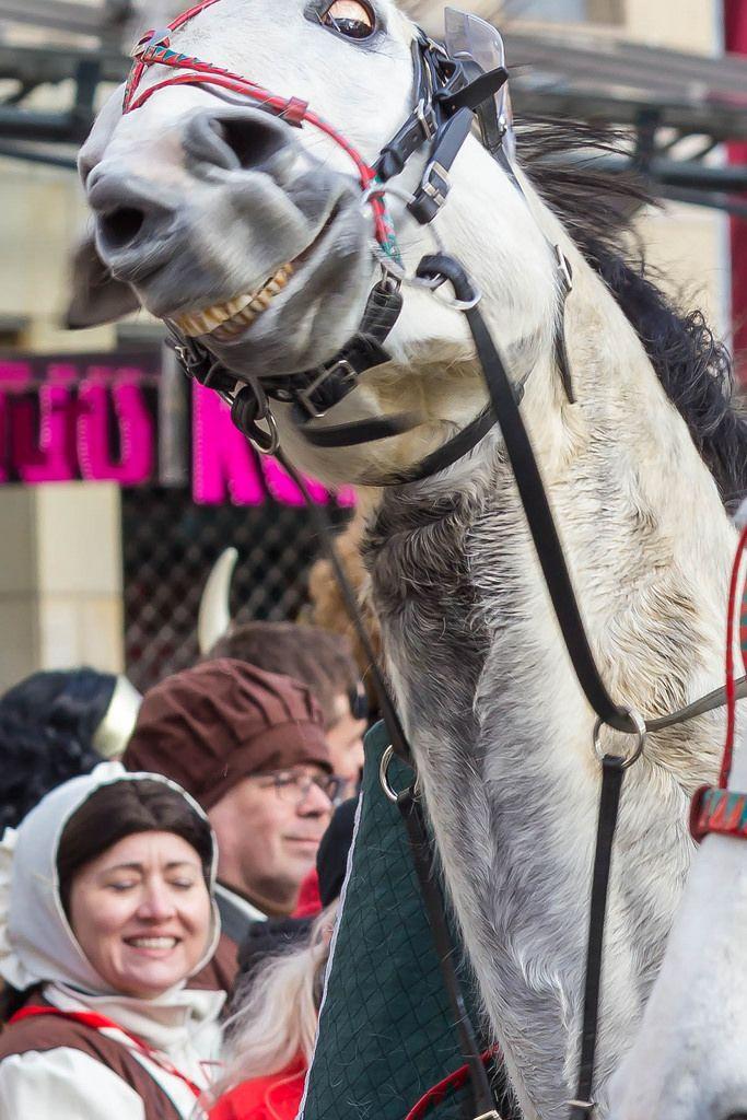 Leidendes Pferd (am Durchgehen?)