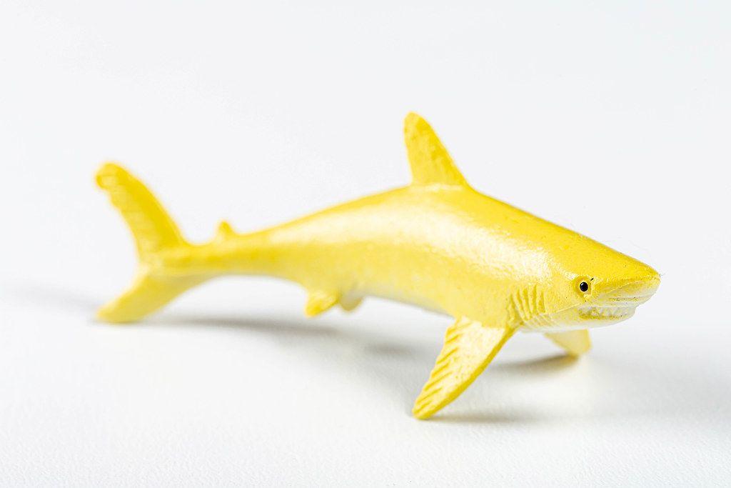 Lemon shark on a white background (Flip 2019)