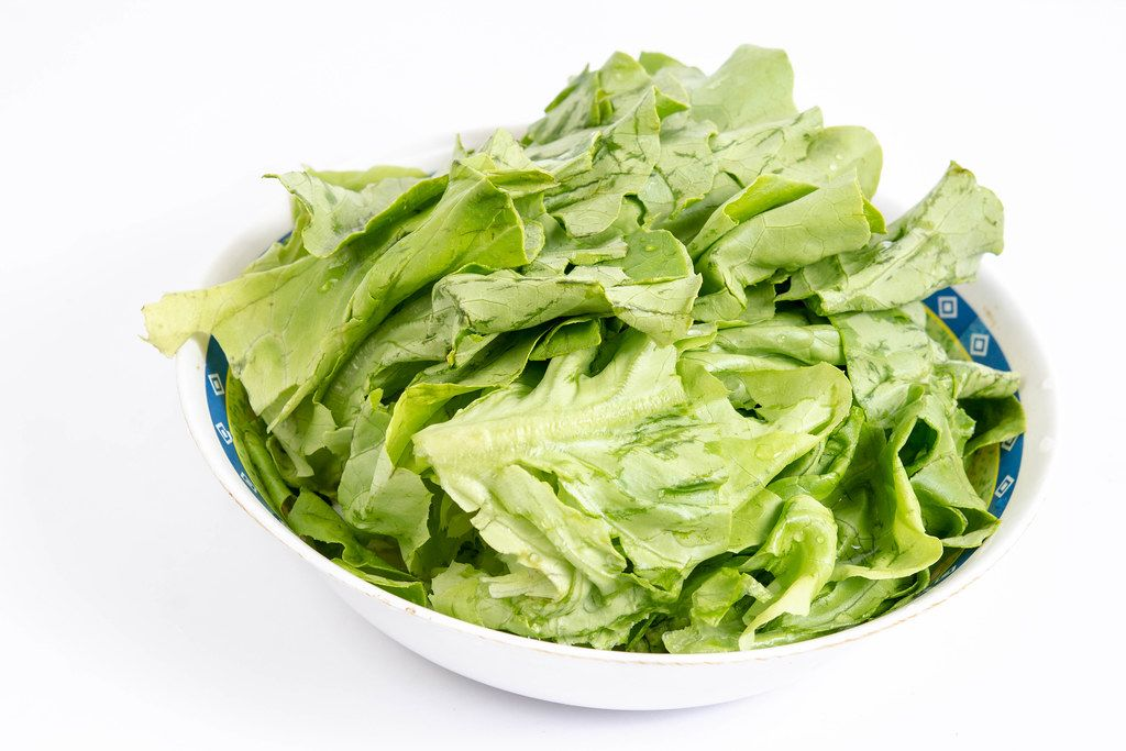 Lettuce Salad in the bowl above white background
