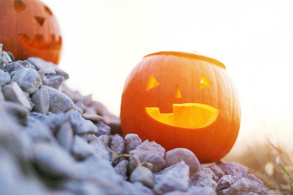 Lighted carved pumpkins on gravel (Flip 2019)