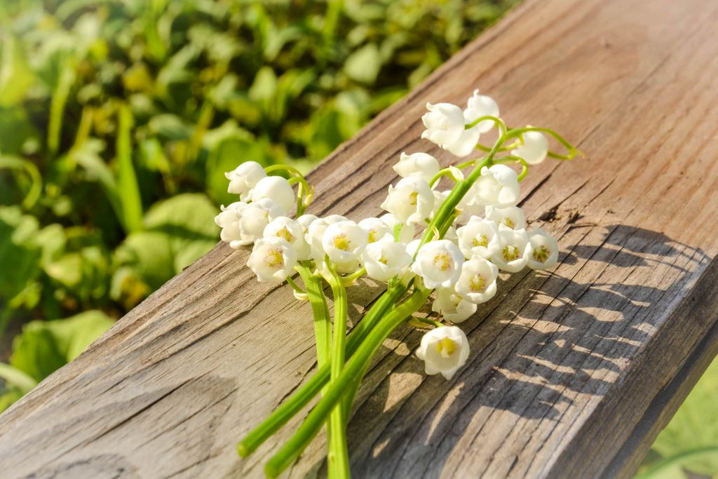 Lily of the valley on a piece of wood