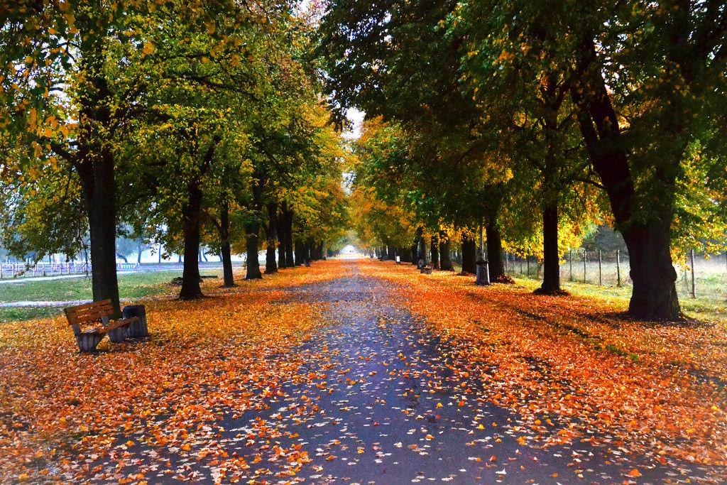 lindenallee bäume im herbst  creative commons bilder