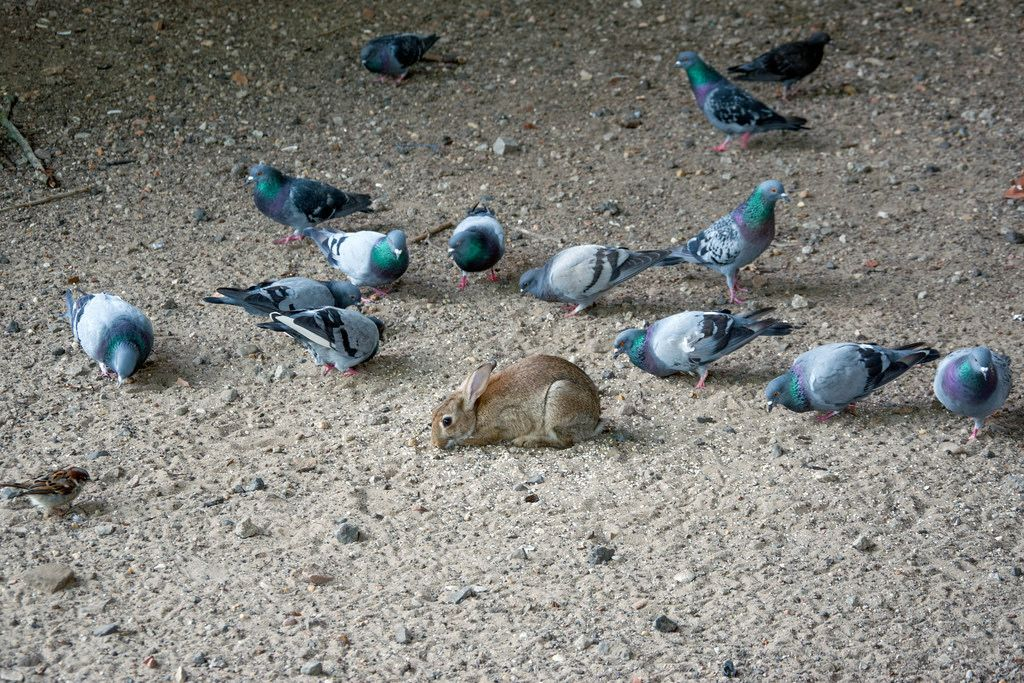 little bunny among pigeons in an improvisational animal shelter in Berlin, Germany