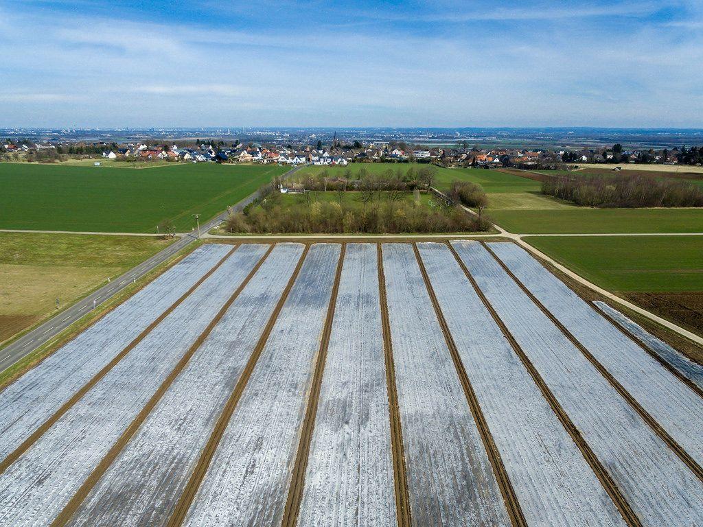 Luftbild von Feldern mit Spargel unter Folie
