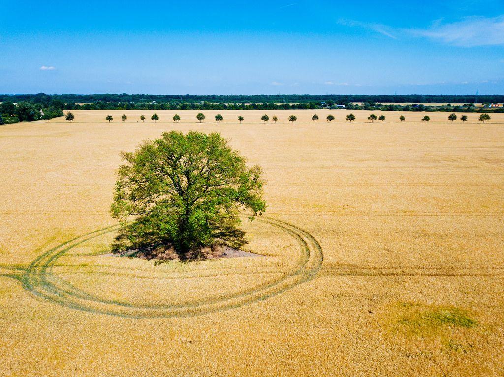 Luftbildaufnahme eines Baums mitten im Feld