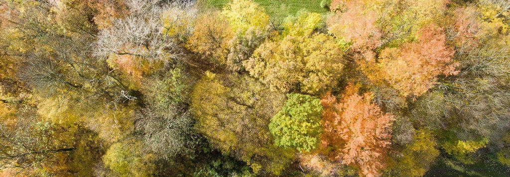Luftbildaufnahme eines Waldes: Herbstfarben