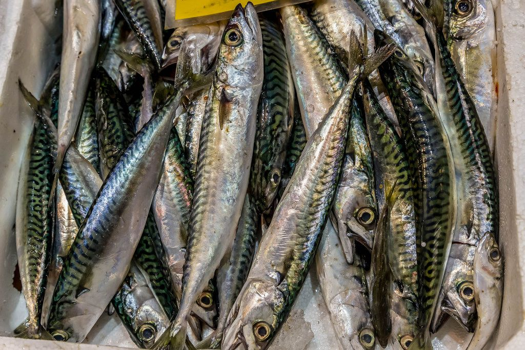Mackerel on fish market