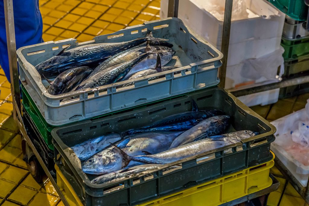 Mackerels in plastic boxes go on sale