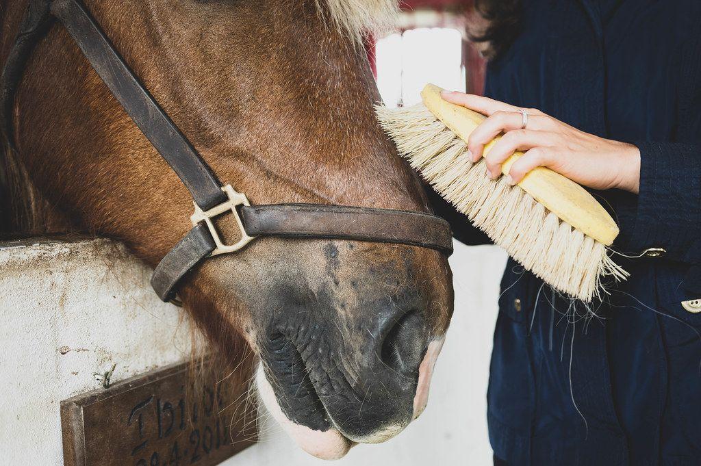 Mädchen bürstet die Schnauze eines Pferdes