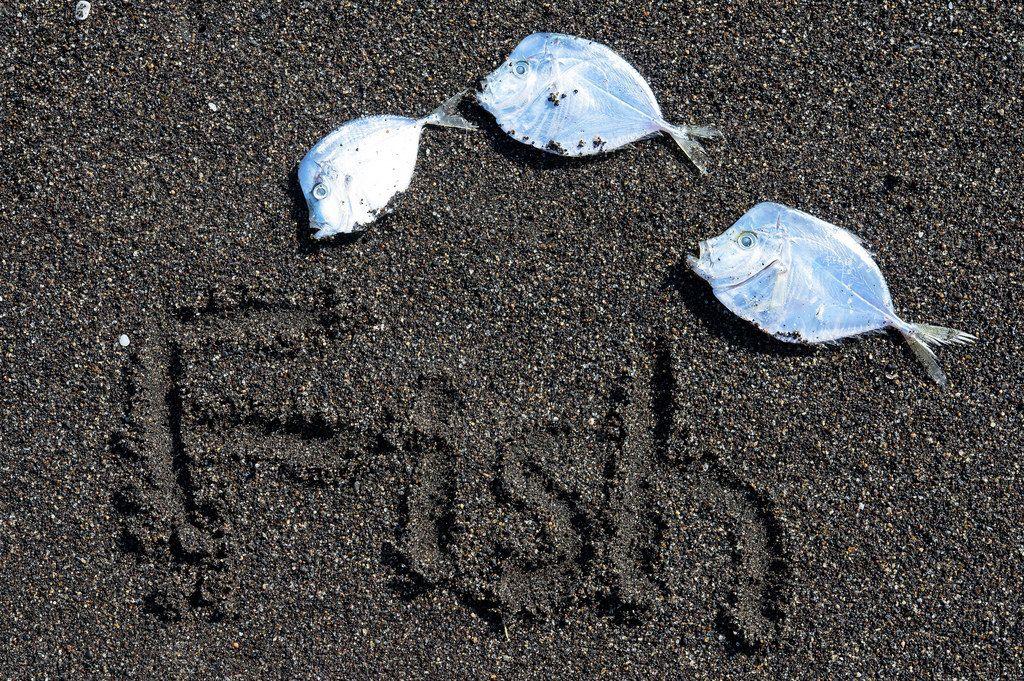 Mehrere Fische die in Richtung des Wortes FISH im Sand zeigen