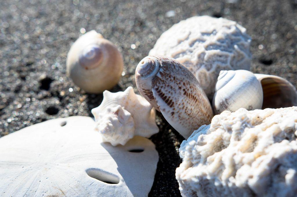 Mehrere Meerestiere auf dem Sand