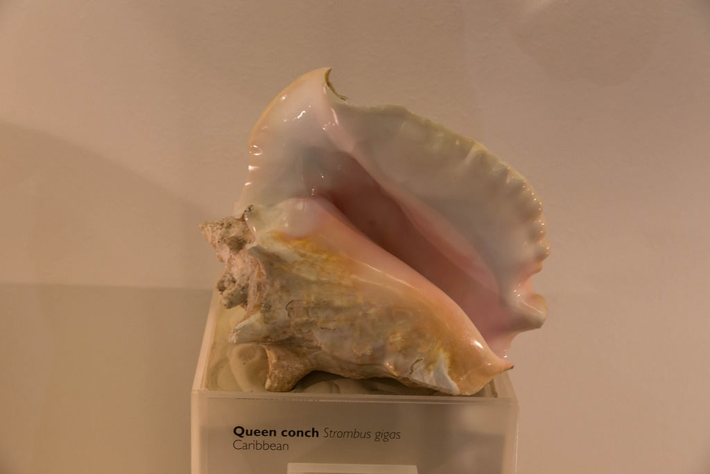 Muscheln / Shells