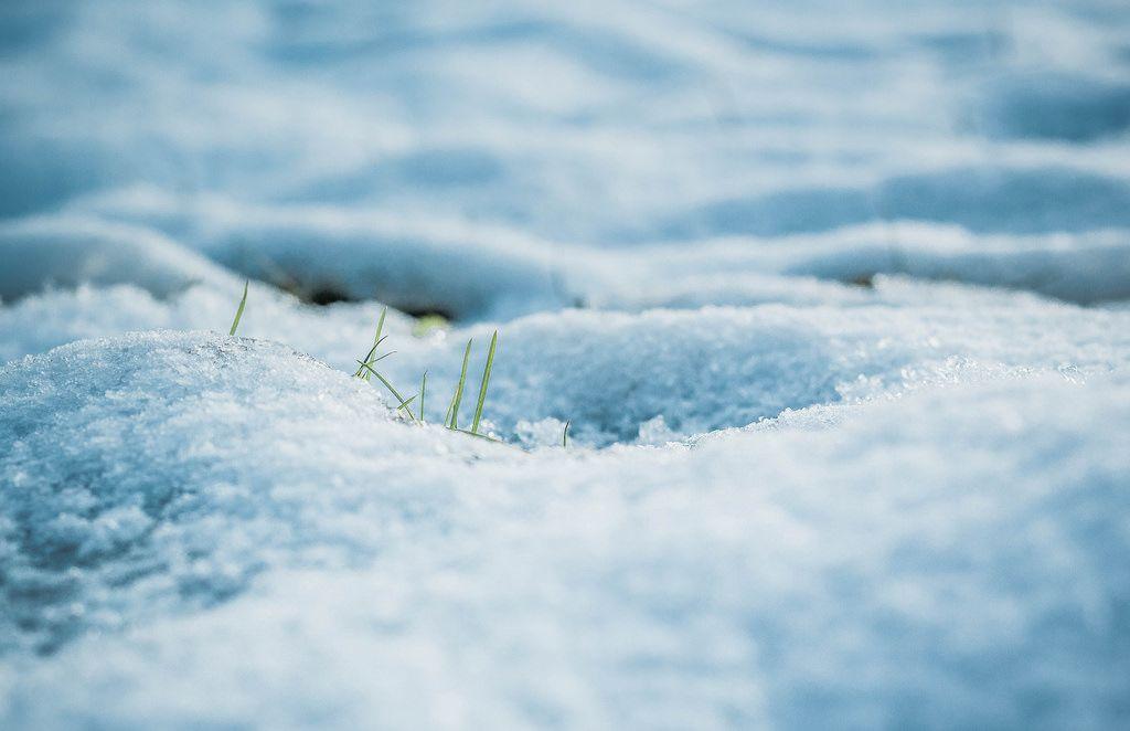 Nahaufnahme vom Schnee