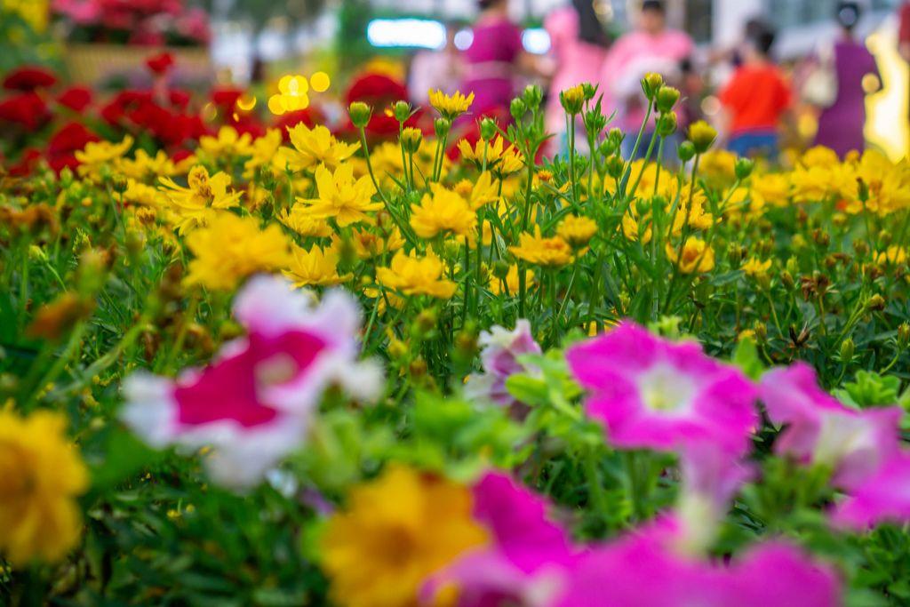 Nahaufnahme von gelben und violetten Blumen in Ho Chi Minh City, Vietnam