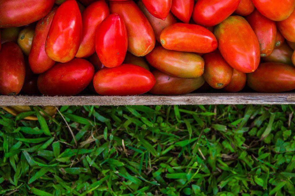 Nahaufnahme von Roma Tomaten in Holzkiste mit grünem Hintergrund