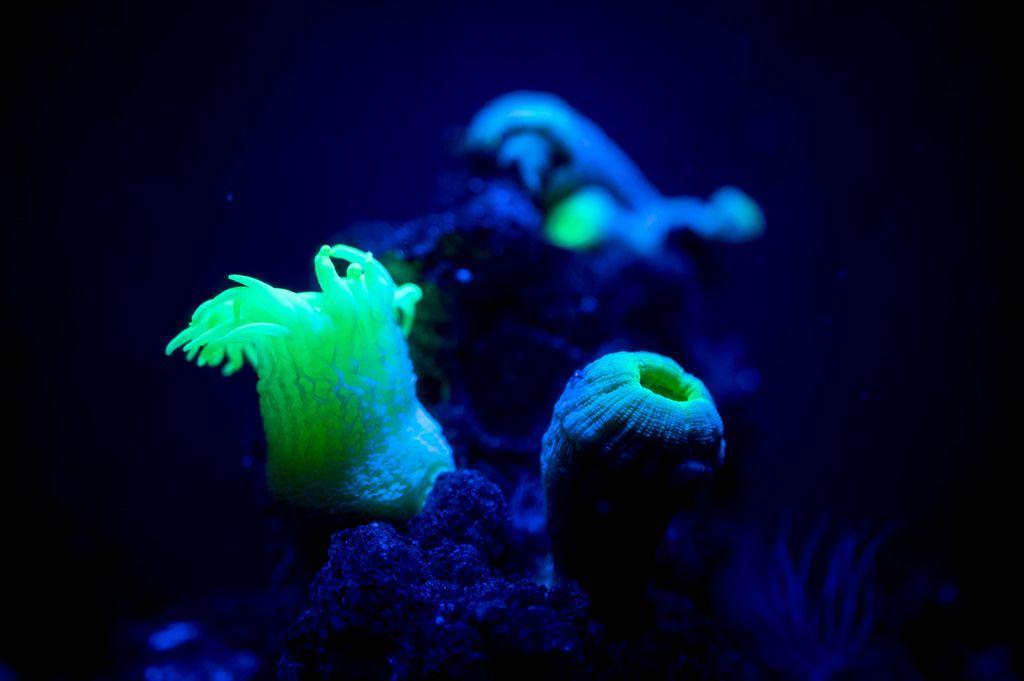 Neonfarbene Korallen