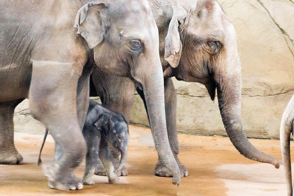 New-born elephant named