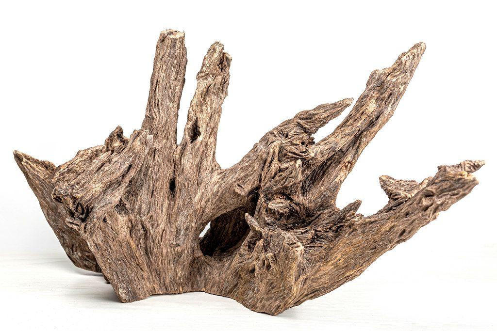Old wooden driftwood decor for aquarium