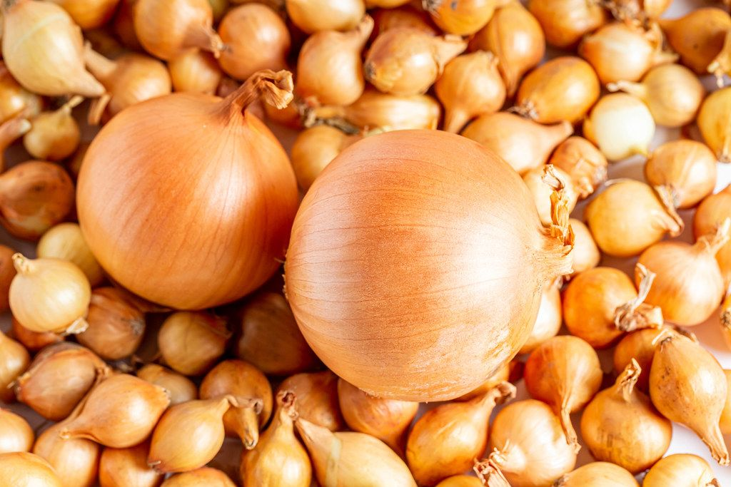 Onion background with large bulbs and small ones