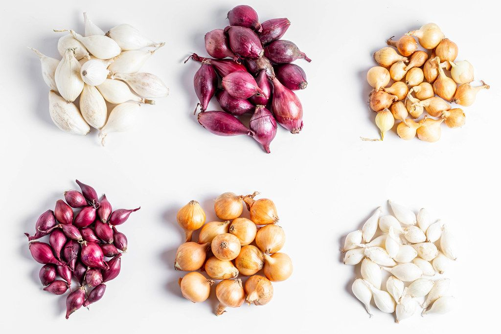 Onions of different colors and varieties