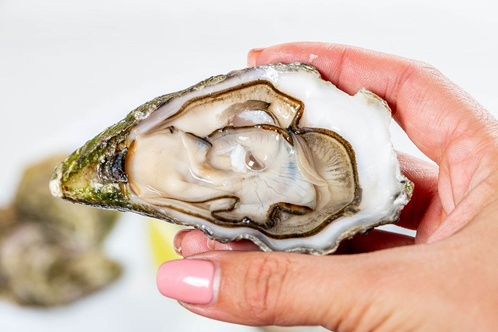 Open oyster in a woman's hand, against a background of open oysters, close-up (Flip 2019)