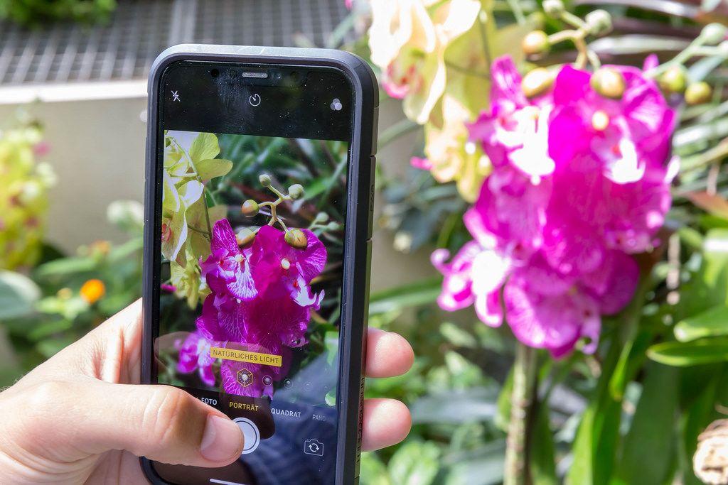Orchideen mit Handy fotografieren