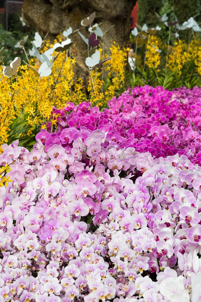 Orchideen-Vielfalt