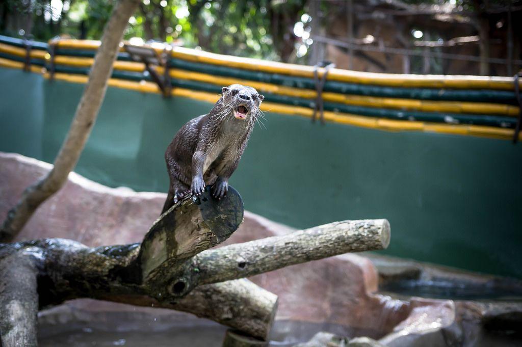 Otter auf einem Holzklotz