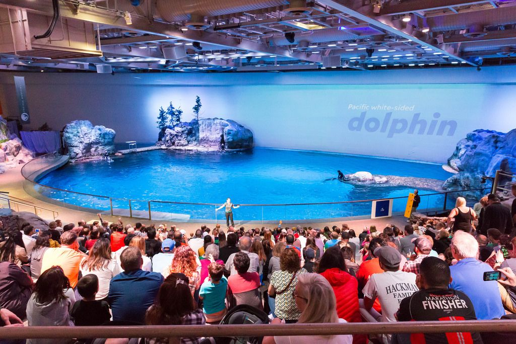 Pacific white-sided dolphin show at Shedd Aquarium
