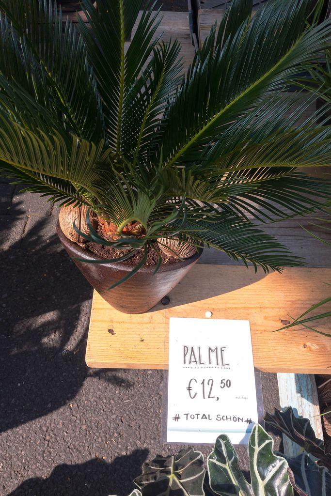 Palm in flowerpot - Street fair, Cologne
