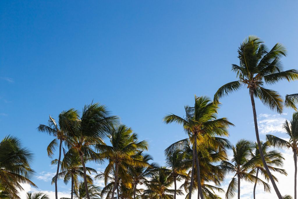 Palm trees at sunny day