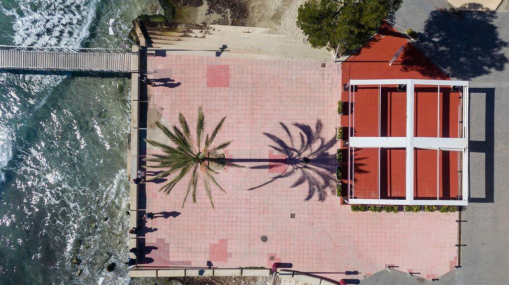 Palme wirft einen langen Schatten. Drohnenaufnahme