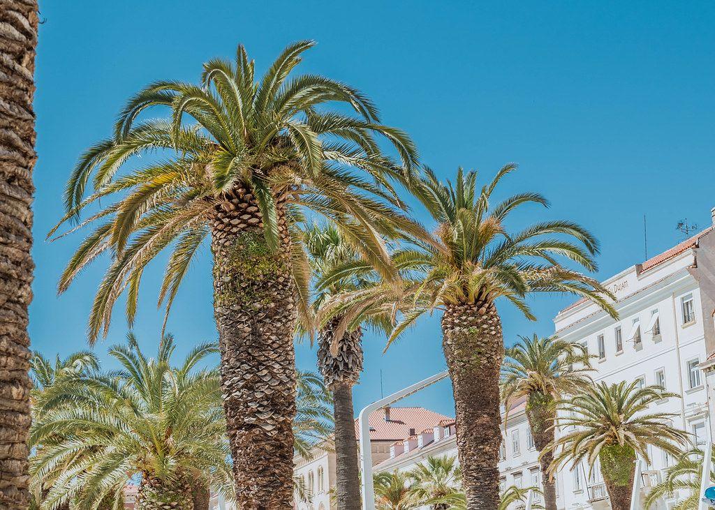 Palmenkulisse von blauem Himmel und weißer Häuserfassade