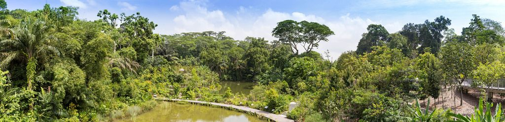 Panorama of Singapore's Botanic Garden