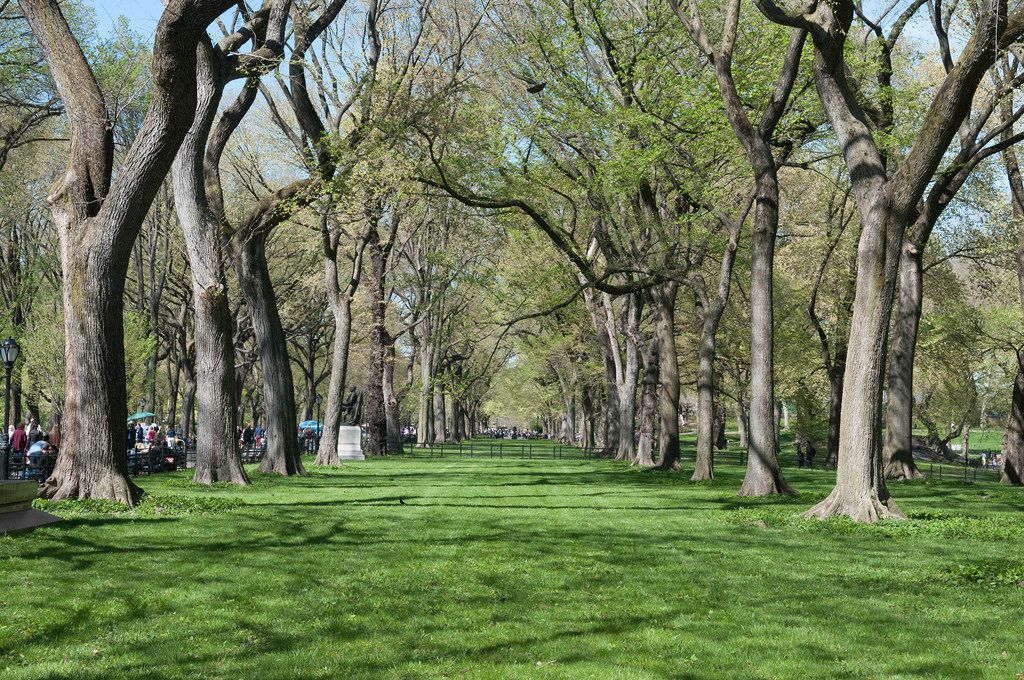 Park in New York City, USA