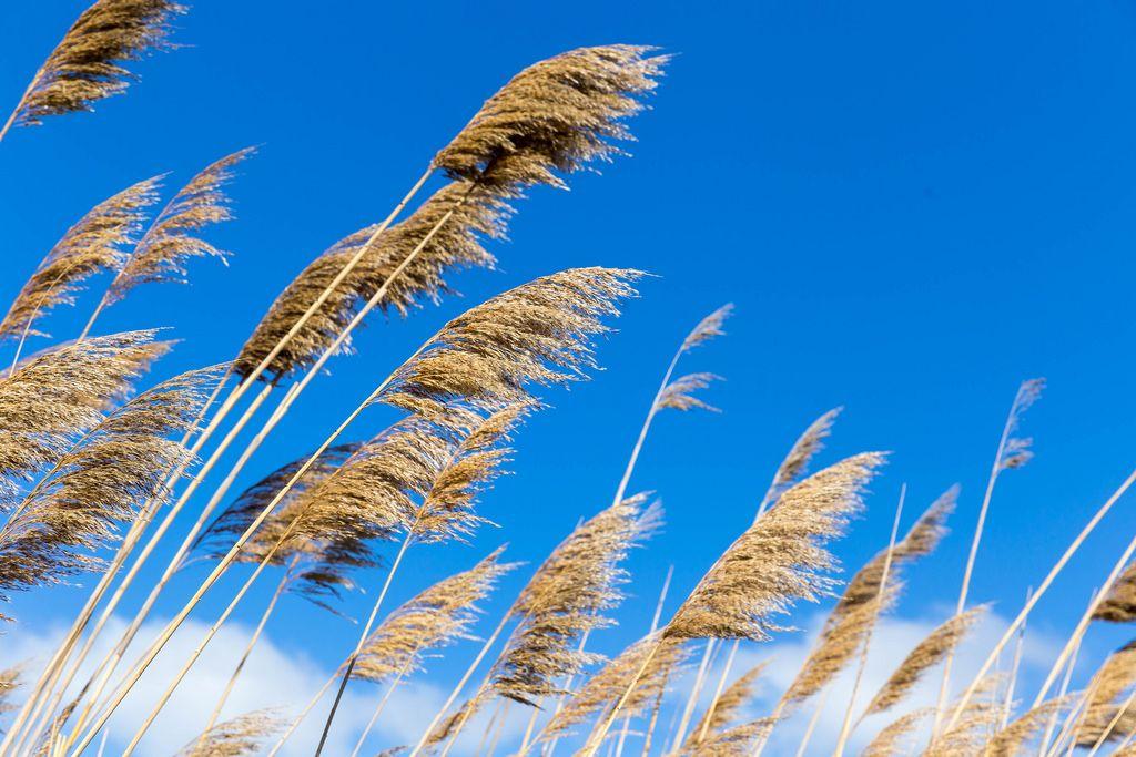 Pflanzen entlang eines Wasserkanals vor blauem Himmel