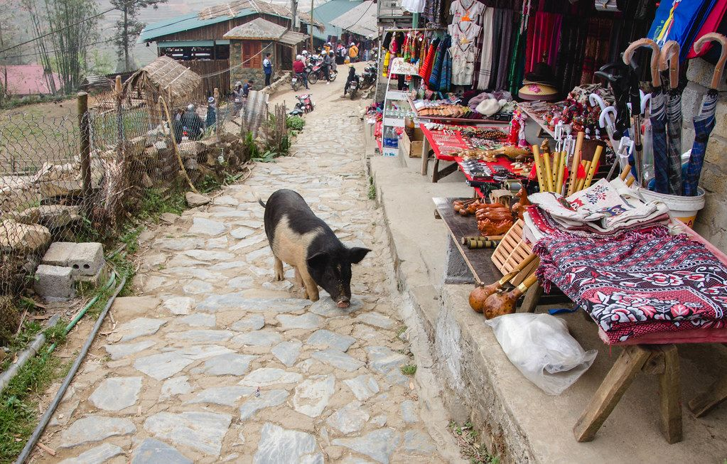 pig on the road at the market  (Flip 2019)