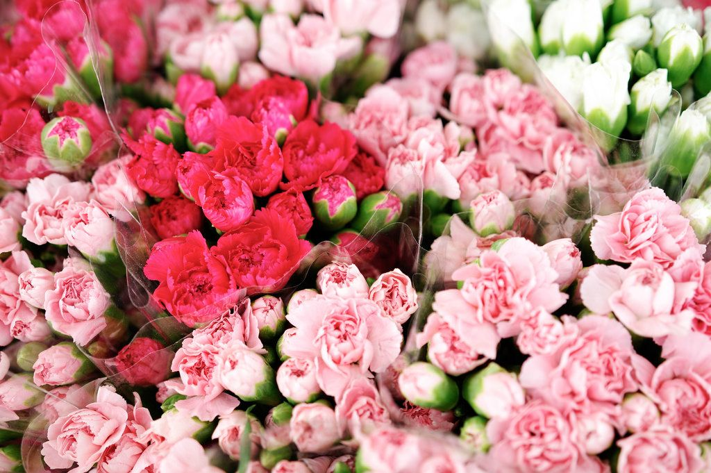 Pinke Mini-Rosen in Sträußen