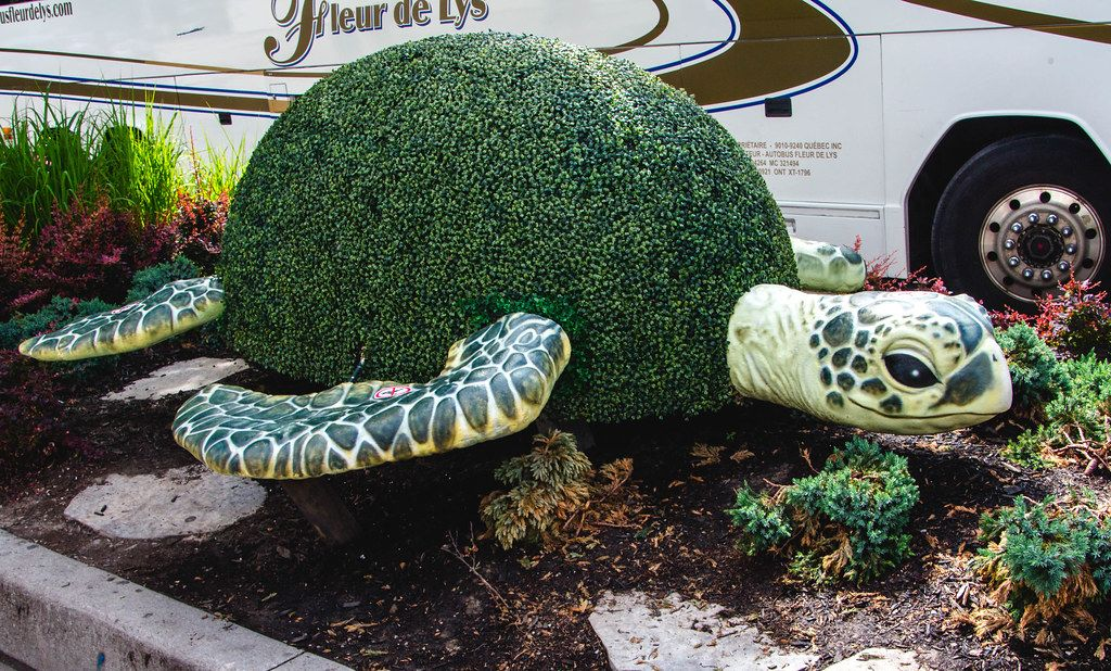 Plant cut  Shaped like  a Turtle