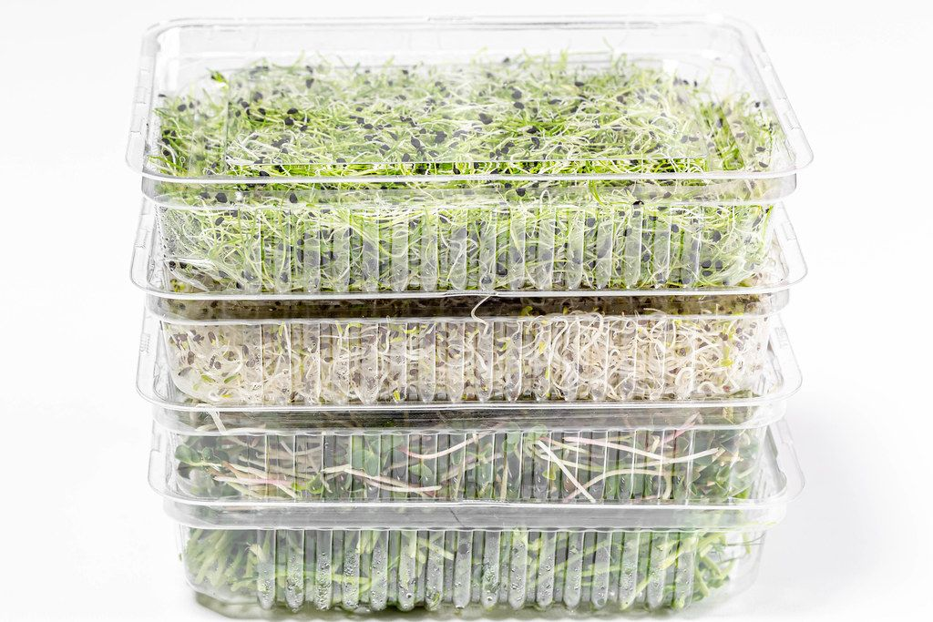 Plastic containers with different fresh micro greens