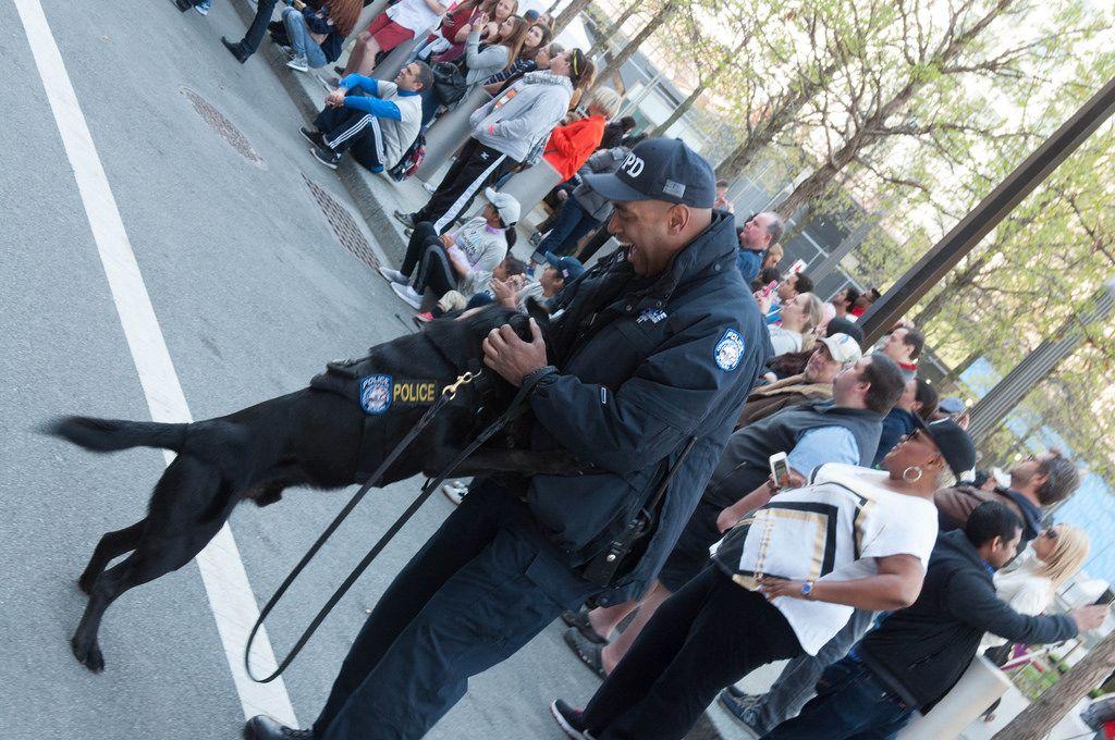 Polizist mit Polizeihund vor Menschenmasse in New York City, USA