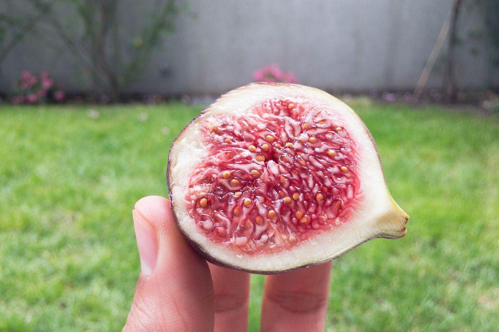 Querschnitt einer Feige: Fruchtfleisch und Samen