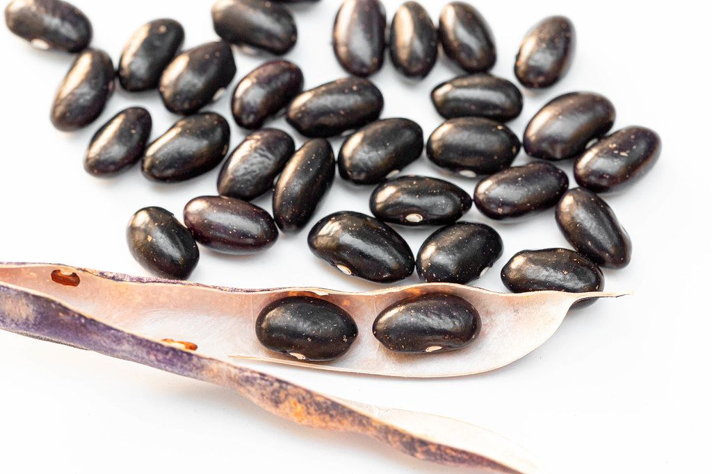 Raw black beans on white background