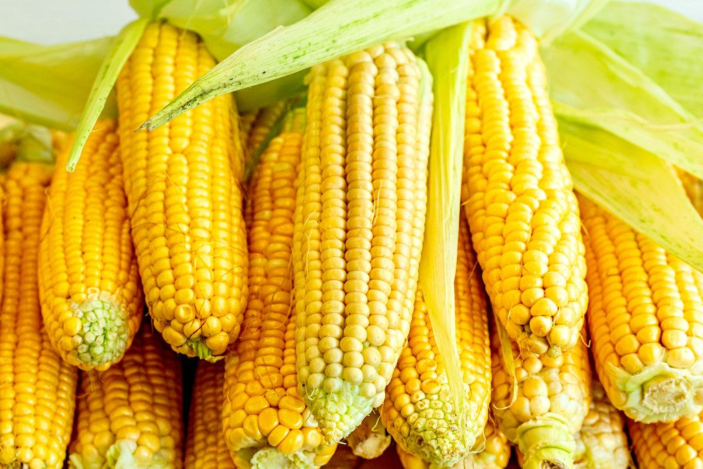 Raw sweet corn heads with leaves