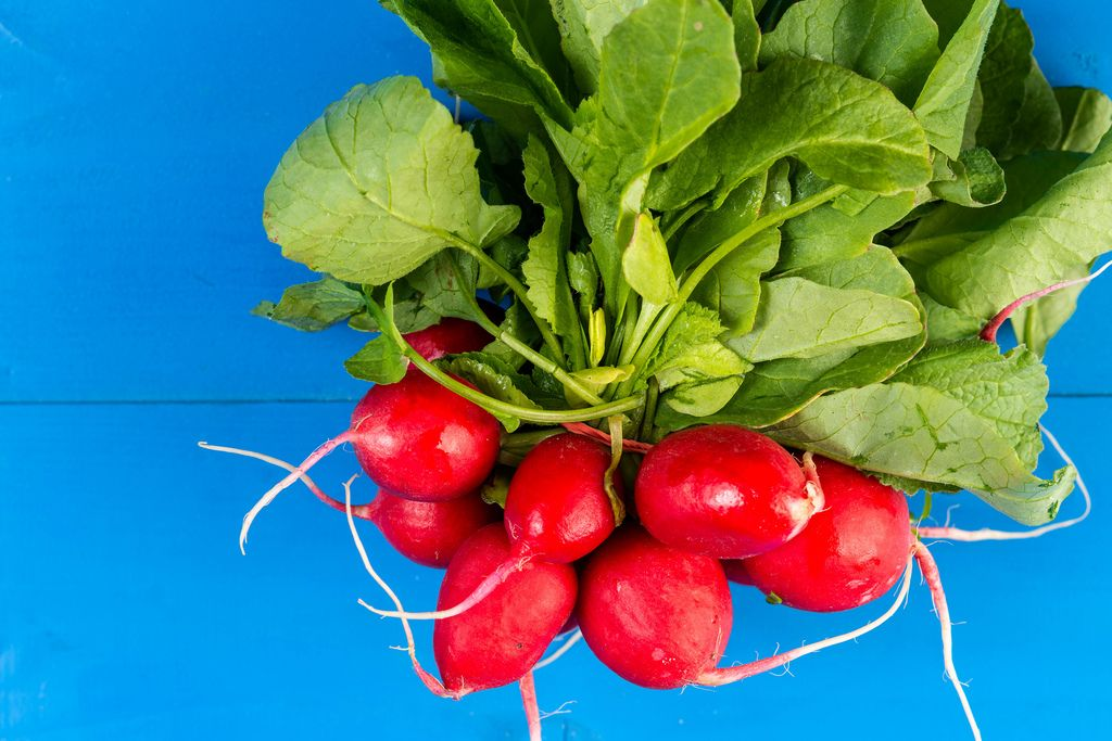 Red Radishes on the blue wooden board